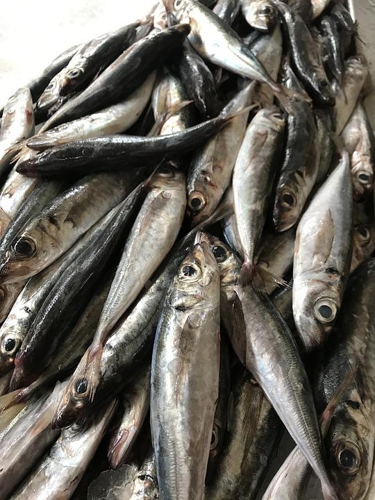 fish-2643280_960_720.jpg